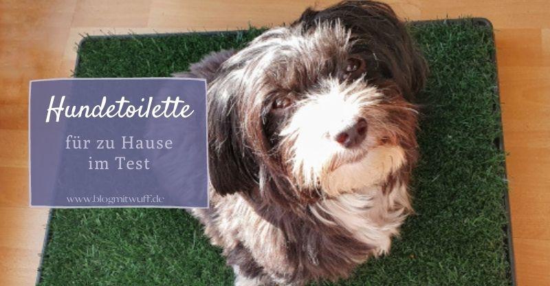 Read more about the article Sailnovo Hundetoilette für zu Hause