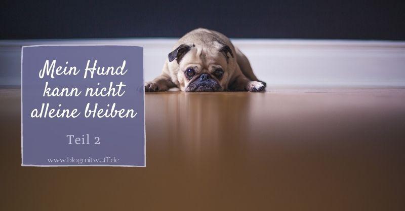 Read more about the article Serie: Mein Hund kann nicht alleine bleiben | Teil 2