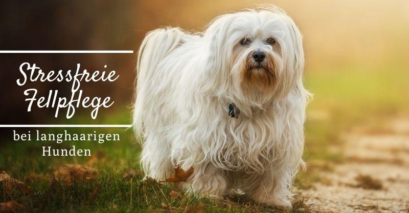 Read more about the article Stressfreie Fellpflege bei langhaarigen Hunden