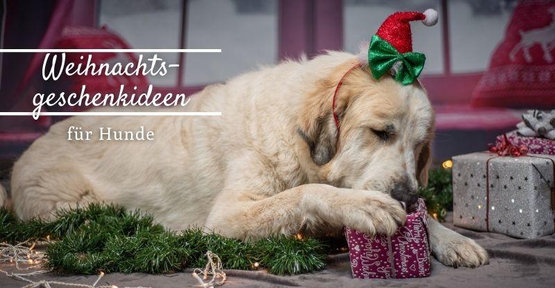 Read more about the article Werbung | Weihnachtsgeschenkideen für Hunde
