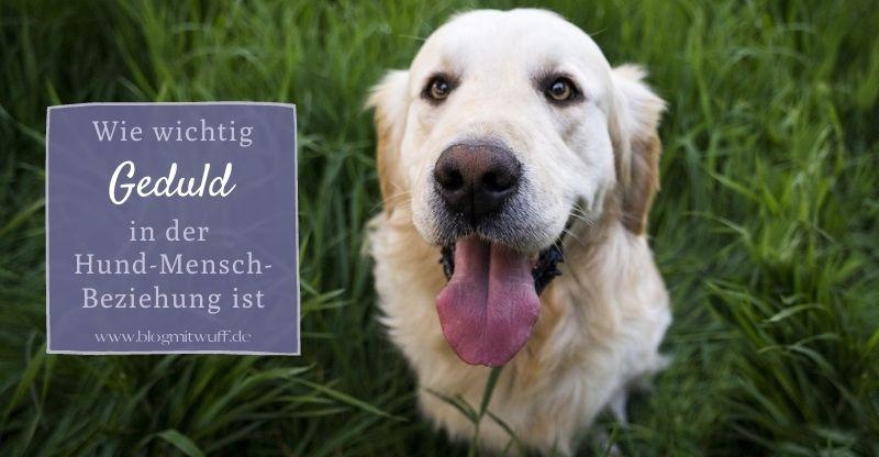 Read more about the article Wie wichtig Geduld in der Hund-Mensch-Beziehung ist
