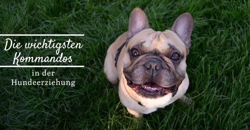 Read more about the article Die wichtigsten Kommandos in der Hundeerziehung