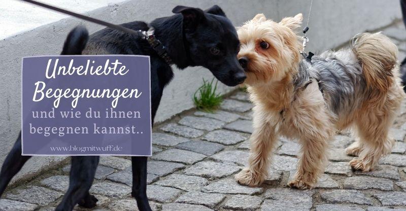Read more about the article Unbeliebte Begegnungen auf Gassirunden