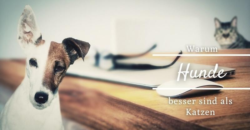 Read more about the article Warum Hunde besser sind als Katzen