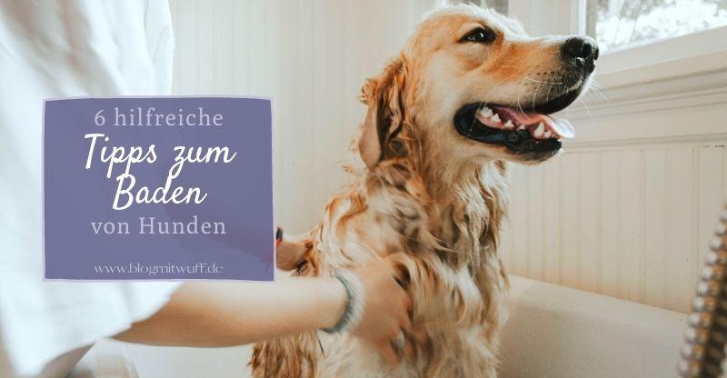 Read more about the article 6 hilfreiche Tipps zum Baden von Hunden