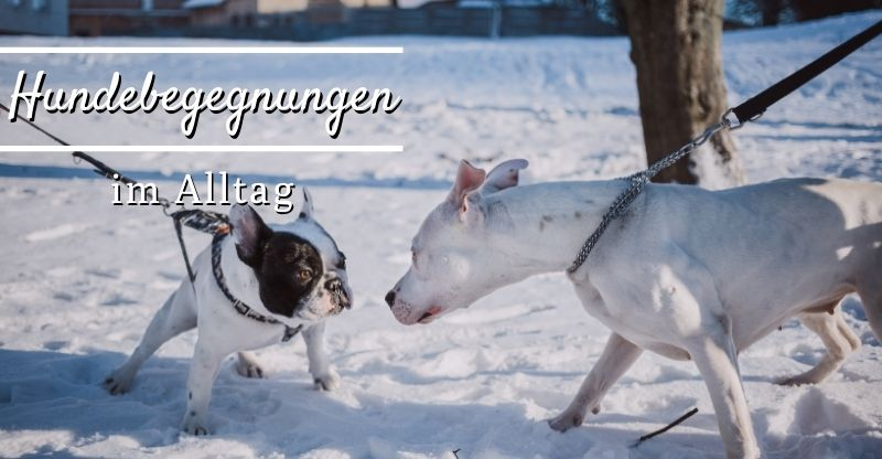 Read more about the article Hundebegegnungen im Alltag