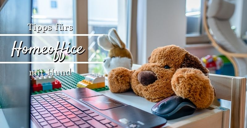 Read more about the article Tipps fürs Homeoffice mit Hund