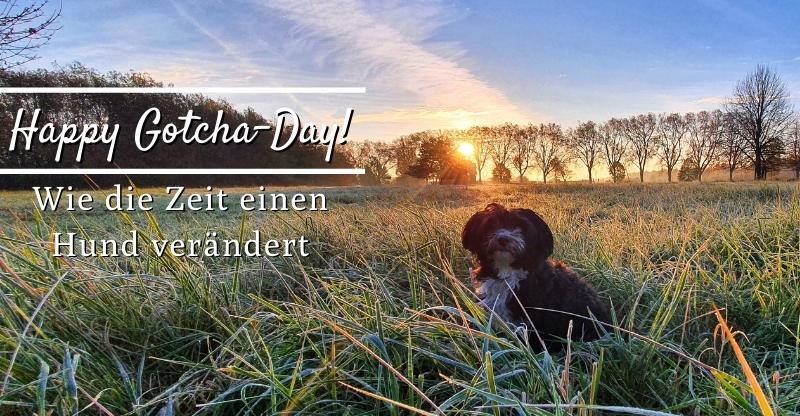 Read more about the article Happy Gotcha Day! – Wie die Zeit einen Hund verändert