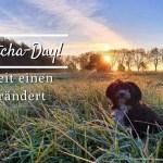 Happy Gotcha Day! – Wie die Zeit einen Hund verändert