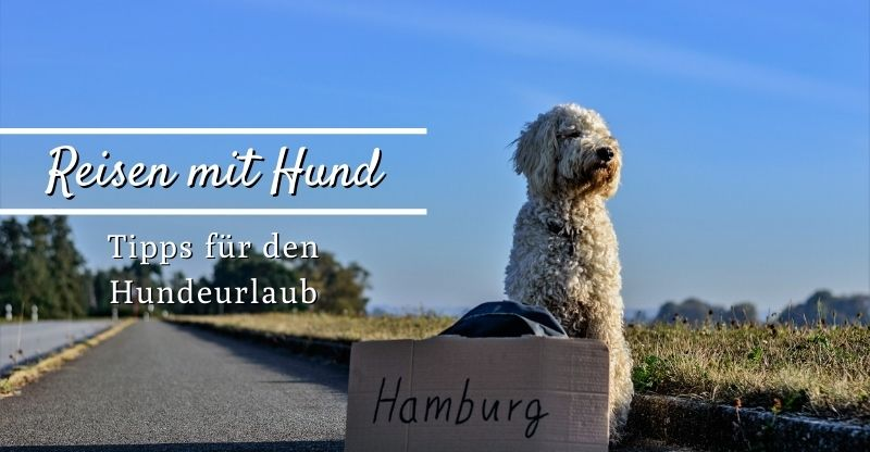 Read more about the article Reisen mit Hund