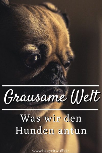 Pin Grausame Welt - Was wir Hunden antun