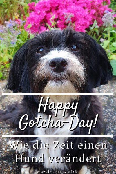 Pin Happy Gotcha-Day