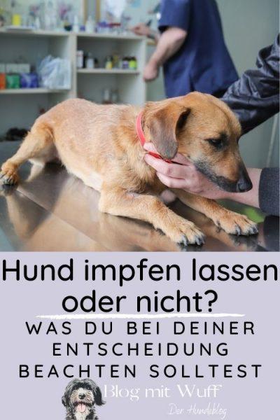 Pin zu Hund impfen lassen oder nicht