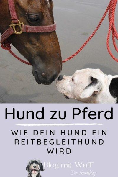 Pin zu Hund zu Pferd