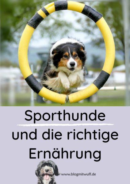 Pin zu Sporthunde und die richtige Ernährung