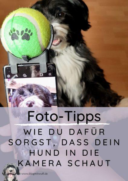 Pin zu Wie du dafür sorgst dass dein Hund in die Kamera schaut