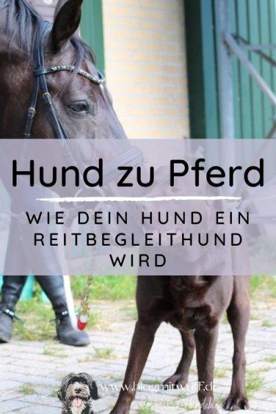 Titelbild zu Hund zu Pferd