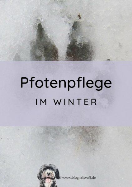 Titelbild zu Pfotenpflege im Winter