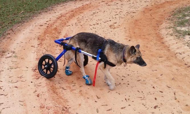 Hunde mit Handicap