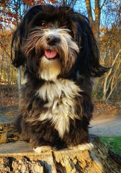 hund-im-wald-sonnenuntergang