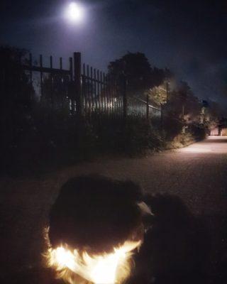 Buffy im Dunkeln mit Anicoll LED Leuchthalsband
