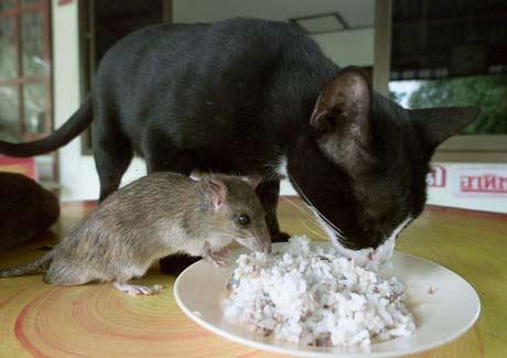 https://i0.wp.com/www.blogodisea.com/wp-content/uploads/2010/01/animales_humor_gato_raton.jpg