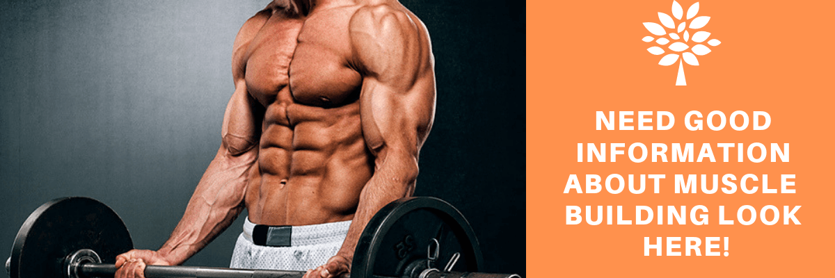 Muscle Building Need Good Information About Muscle Building