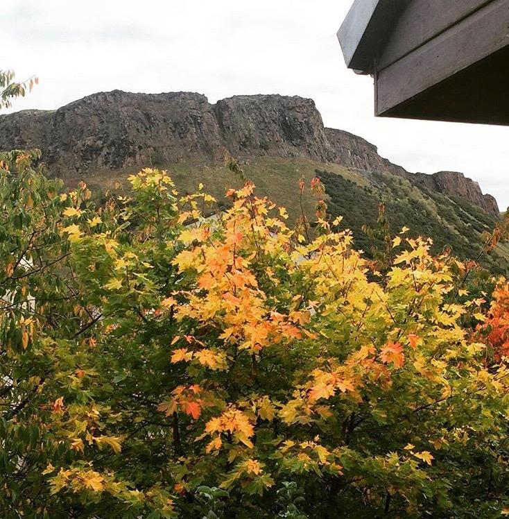 fall leaves, arthurs seat