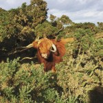 Fantastic coos and where to find them