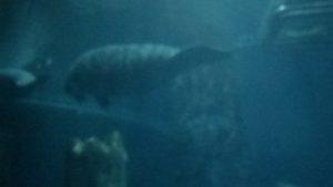Fish Aquarium in the Singapore Tour