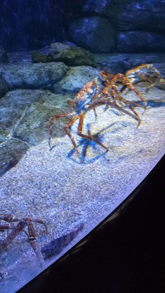 Singapore Tour Marine Life