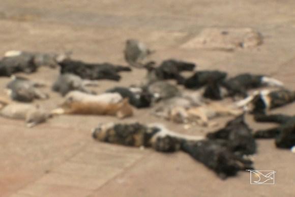 Extermínio de gatos causa comoção e revolta ativistas em São Luís