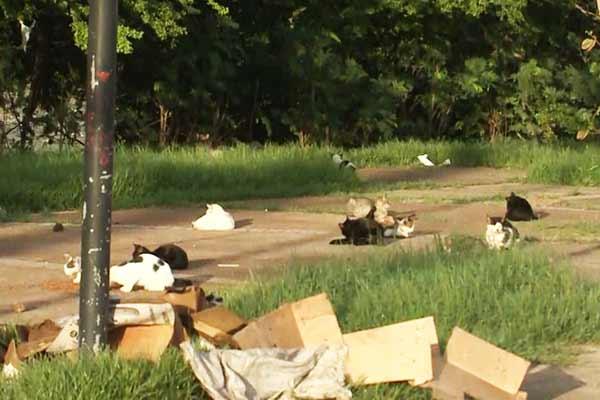 Mais uma vez vários gatos são exterminados misteriosamente em São Luís