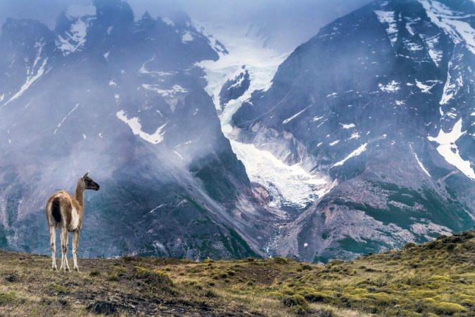 Guacano en Torres del Paine