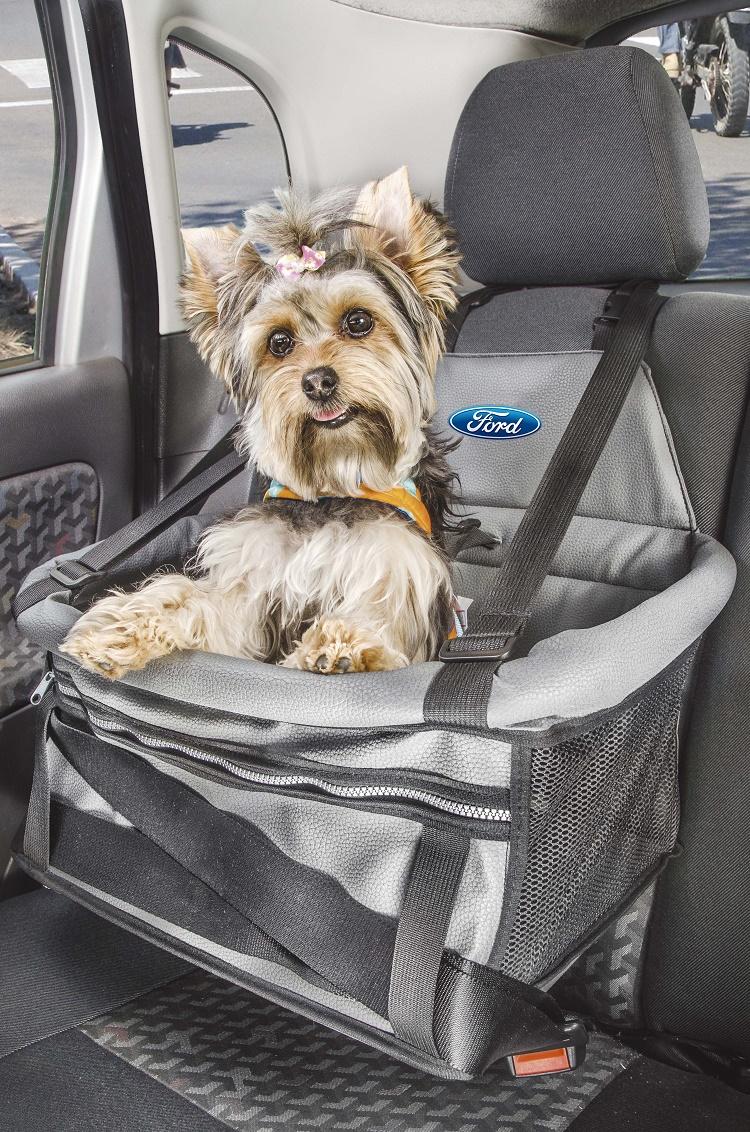Ford  ensina o modo correto de  transportar os pets
