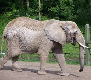 How To Eat An Elephant…
