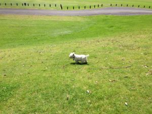 Lily enjoying Cornwell Park, Auckland