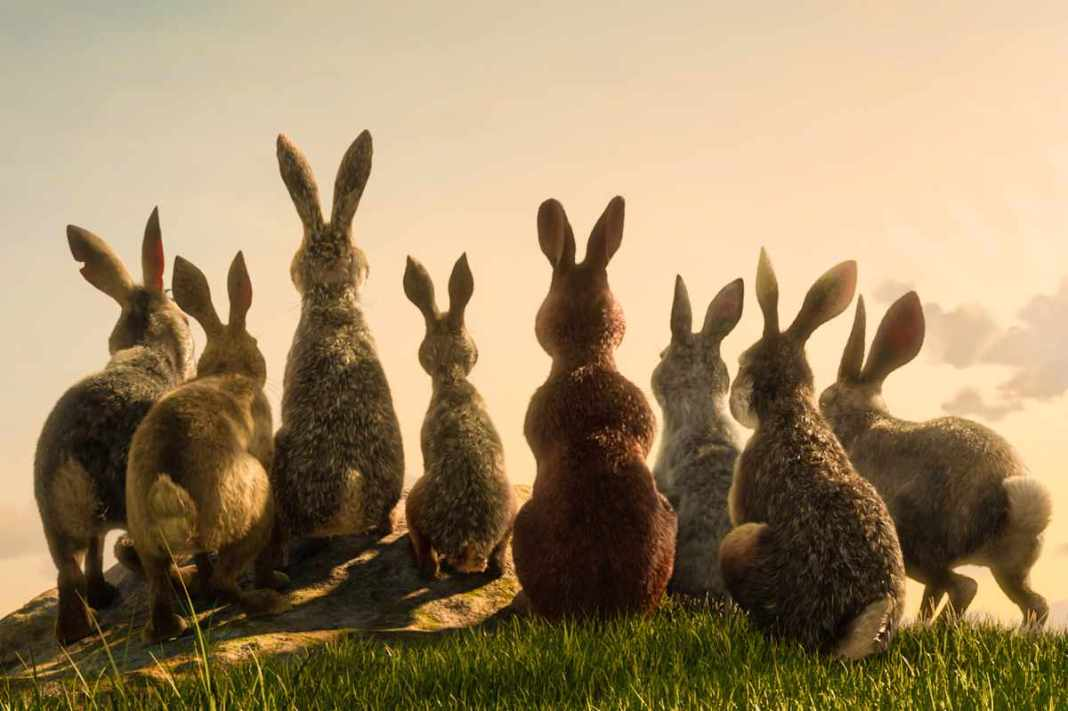 The rabbits of Watership Down (c) BBC/Netflix