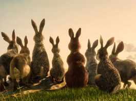 The rabbits of Watership Down (c) BBC/Netflix