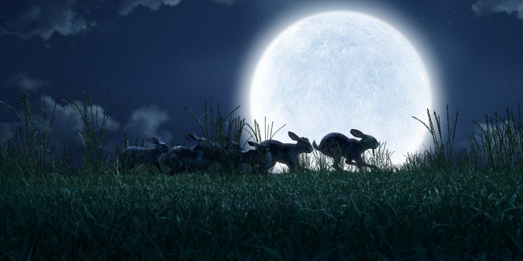 Our band of rabbits travel home to Watership Down - (C) Watership Down