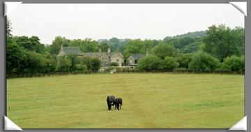 trailhorses.jpg