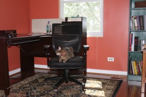 "Riley the cat inspects the new office, which is not strictly ""his."""