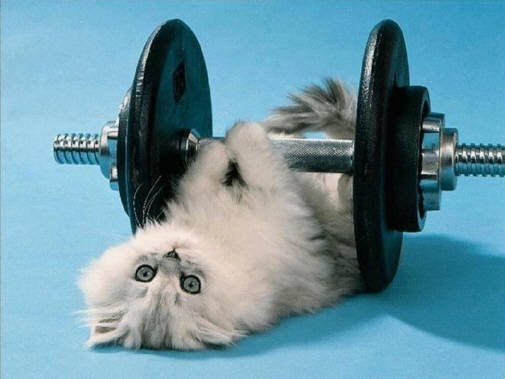 propositos año nuevo, gato, ejercicio