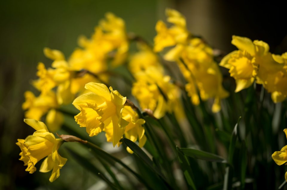 Når foråret kommer…