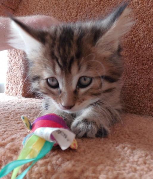 kitten-mittens-1