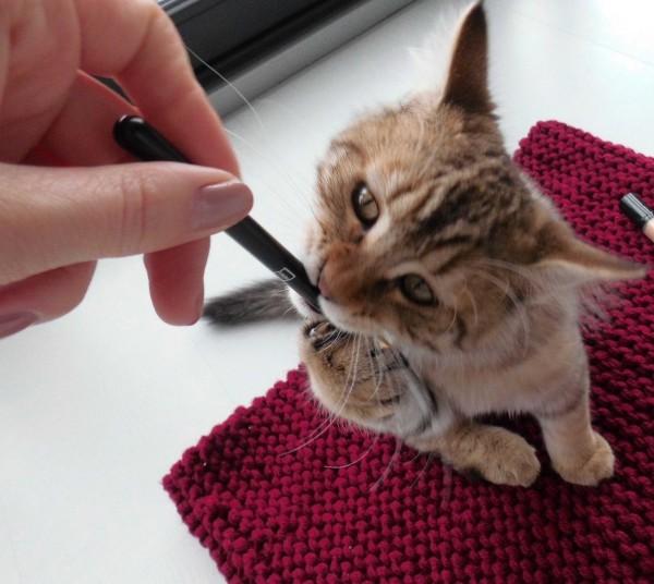Mittens-cutest-kitten-5-maanden-oud-7