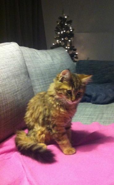 Mittens-cutest-kitten-5-maanden-oud-9