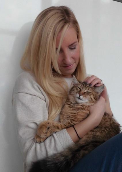 Pixiebob-kitten-mittens-een-half-jaar-6
