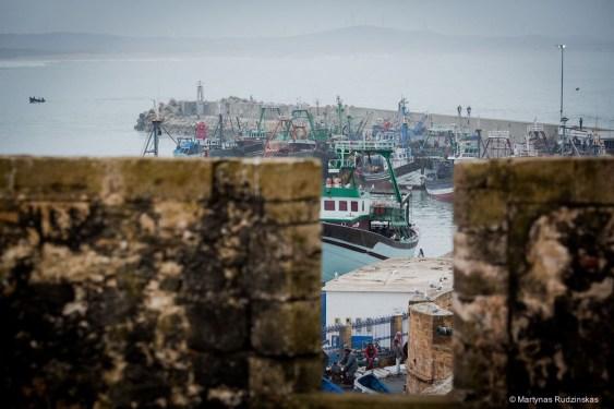 morocco, essaouira, fish, port, fishmen