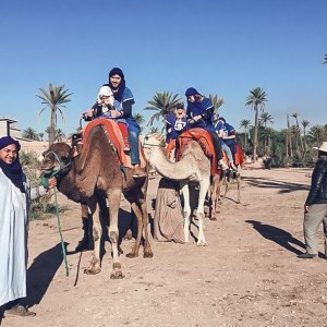camel ride, marrakech, camels, palm trees